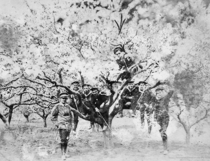 In der Kirschblüte Tsingtau 1913